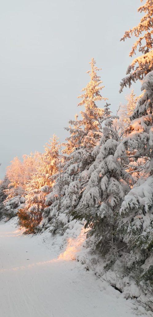 Winterlandschaft rund um Ilmenau